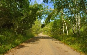 the-road-in-the-woods-1343493464PRM